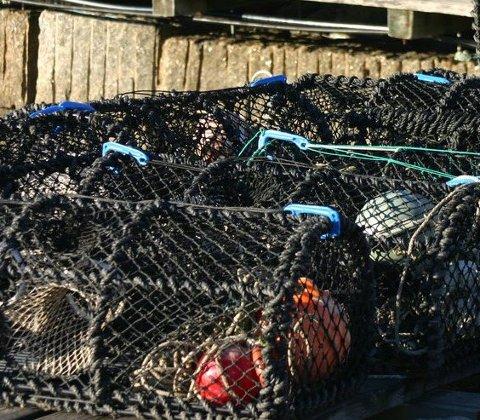 Fortsatt fiske: Mange hummerteiner er på land, men noen fisker fortsatt. Da er det surt å bli utsatt for tyveri.