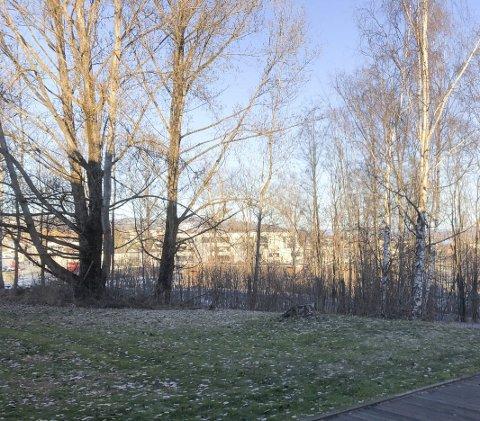 Snøfritt: Slik så det ut utenfor OAs kantine onsdag formiddag. Unormalt, mener du? Ikke så veldig, viser statistikken.