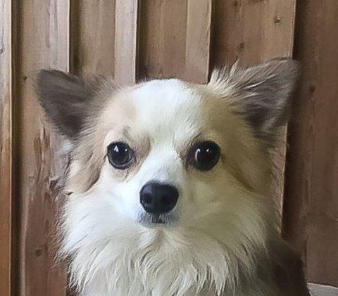 Endelig kan Rocky, som hunden heter, komme tilbake til sin familie.