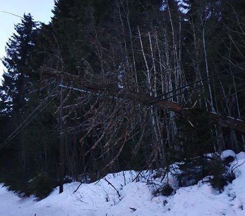 IHLE: Et tre har ligget over strømlinja siden i vår.