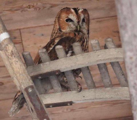 OPPLEVELSE: En storslagen naturopplevelse sier Per Erik Hagen, som ble overrasket over å finne en ugle i garasjen.