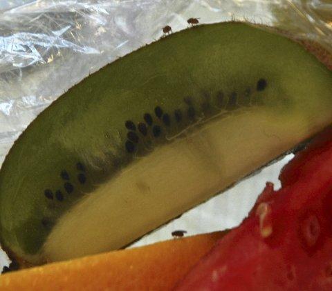 MIKROSKOPISKE: Bananfluene er bittesmå, men kan være til stor irritasjon.