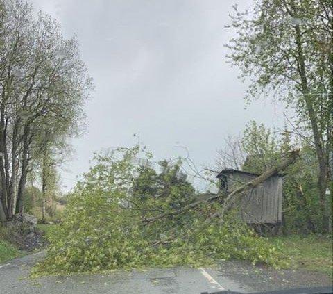 Et tre veltet over Øverbygdsvegen i Gausdal lørdag etter lynnedslag.