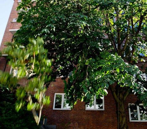 RETTIGHETER: Du kan ha rett til å felle naboens trær ifølge naboloven. Foto: Vegard Grøtt / NTB scanpix (Foto: Grøtt, Vegard Wivestad)