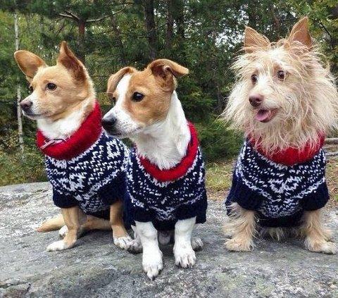 KOMPISER: Tre gode venner i klassisk, norsk genser. FOTO: Privat