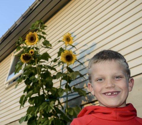 Stolt: Kristian er stolt av jobben han har gjort med solsikkene. Han tror han har Tinnegrends høyeste.