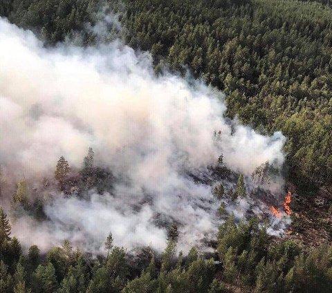 SPREDNING: Skogbrannene sprer seg fort i det tørre været. Dette bildet viser en av brannene som pågår i Aremark.