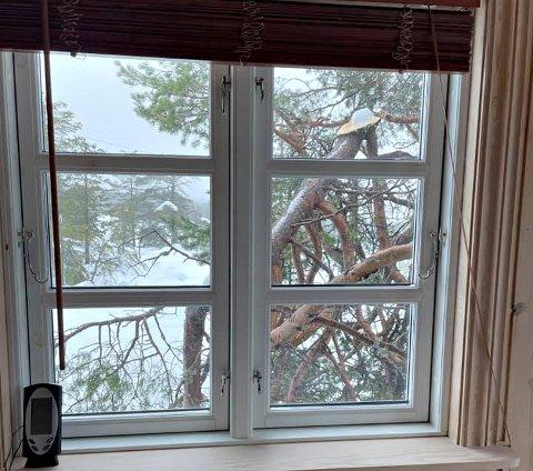 NÆRT: Slik så det ut utenfor hyttevinduet til Øistein Lindmark da han kom til hytta si på Blefjell lørdag.