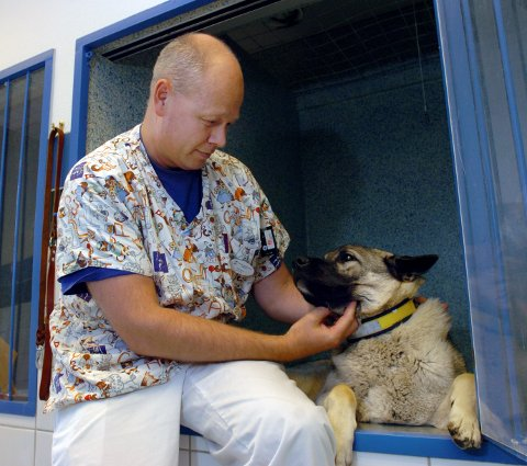 KORONA: Daglig leder og veterinær ved Gjøvik Smådyrsykehus, Tore Berg, oppfordrer dyreeiere til å ta sine forholdsregler, men de skal fortsatt oppsøke klinikken ved behov.