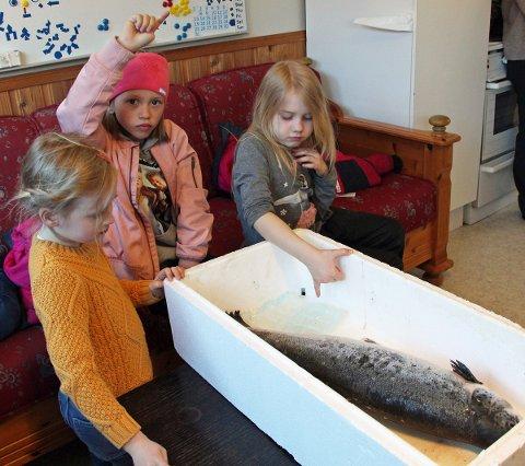 GLAD LAKS: Caisa, Malin og Julie studerer en godt voksen og matklar laks på nært hold.