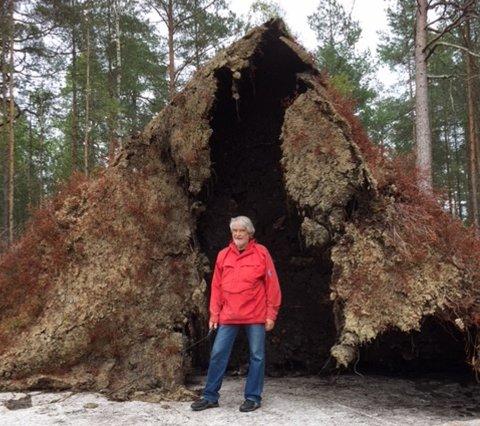 GIGANTROT: Toril Sehested Zakariassen foreviget denne rotvelten i Åsermarka i Askim nylig.