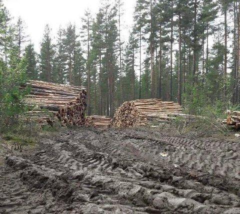 Skogsveiene på Eggemoen har fått hard medfart etter skogsdrift. Men nå skal de settes i stand igjen.