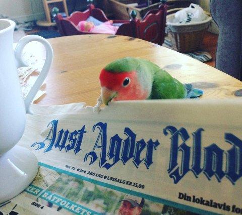 @solveigfroyna: Lokalavisa får stadig nye lesere. #elskerRisør