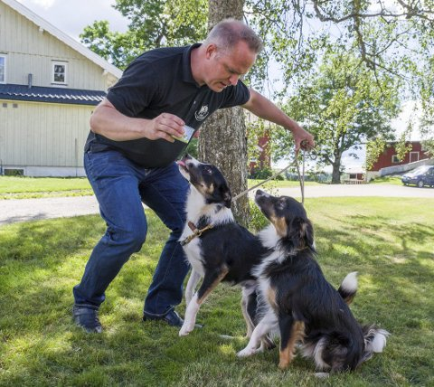 Populært: Kai Hjeldnes fra Vom og hundemat serverer hundeis til sine to gjeterhunder Jim (til venstre) og Dan. Isen har solgt så bra at produsenten har hatt problemer med å lage nok.