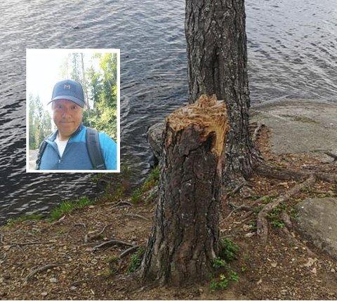 Bjørn Wold synes det er trist at trær blir hugget ned.