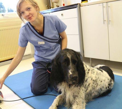 LASERBEHANDLING: Daglig leder Christine Rønning Kvam gir laserbehandling til Hjalmar, som har hatt to ryggprolapser.