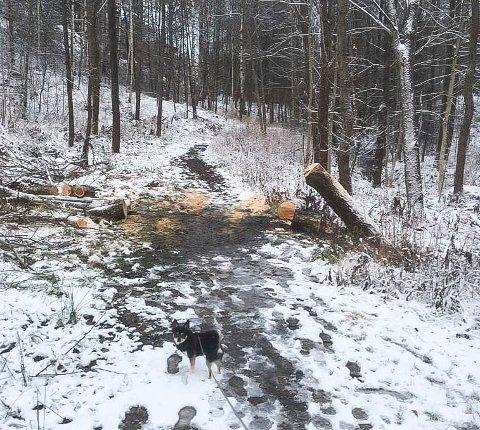 TREFALL: Dette treet hadde blåst ned ved Stenrød barnehage.
