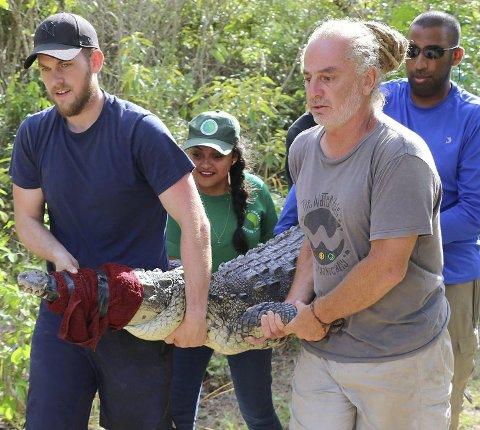 Her har Joe (t.v.) fanget en krokodille som skal undersøkes. Her er han sammen med David Hilmy, Mike Malden og Irene. Alle foto: Crocodile Research Coalition i Belize.