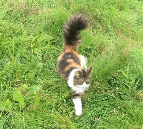 FORSVUNNET: Katten Prada ble borte fra Ålesund denne uken. Nå mistenker matmor hun kanskje er i Moss.