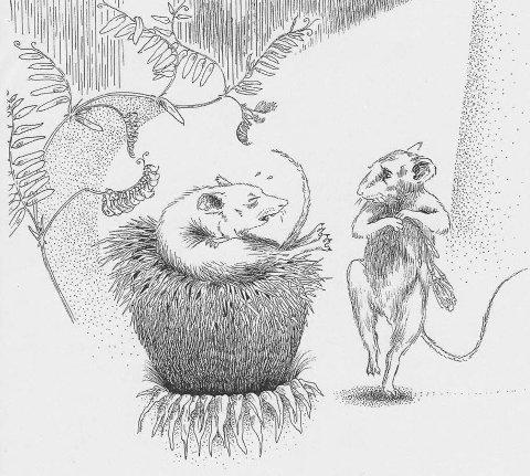 LATE MUS: På den ene øya gidder de ikke lage doer, da blir musene etter hvert syke.