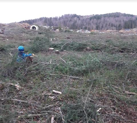 RASERT: – Myraskogen e saga ned. Ikke noen trær. Ikke blåbær igjen. Æ savne Myraskogen. Æ savne treet mitt, sier  Johan betuttet.