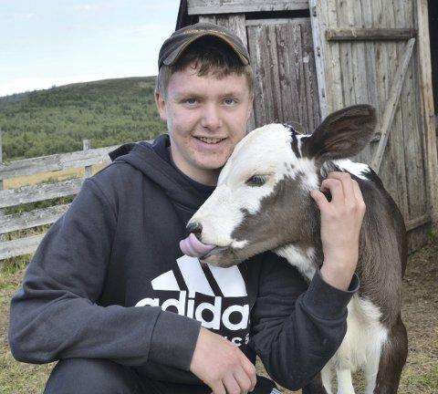 Budeiekall: Andreas Hjellebråten Rødningen (15) har arbeidd på stølen på Nørre Trøllhøvd i Vestre Slidre i heile sumar. Han held fram til skulestart. Her sit han med den unge og sprelske kalven som kom for nokre veker sidan.