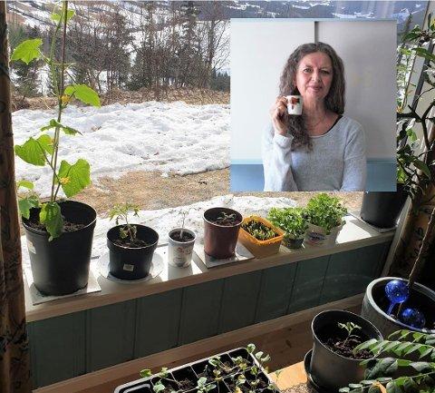 SPIRER I VINDUET: Det er såtid, og mange ser med forventning på at frø blir til spirer, og spirer til frodige livskraftige planter. En av dem er Irene Bjorheim. Hjemme i Lomen har hun fylt opp vinduskarmen med planter.