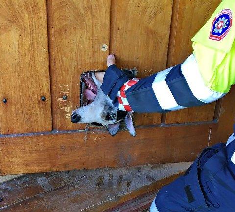 Her gikk det galt for hunden, men heldigvis var det hjelp å få fra brannvesenet.