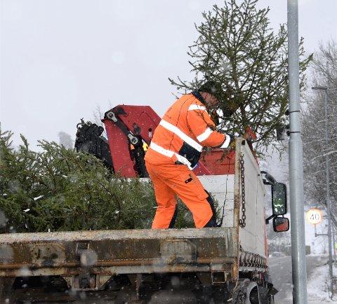 PYNTER I HØYDEN: Kommunalteknisk med lastebil og sjåfør kjørte torsdag ettermiddag rundt for å plasserer ut lokale trær.