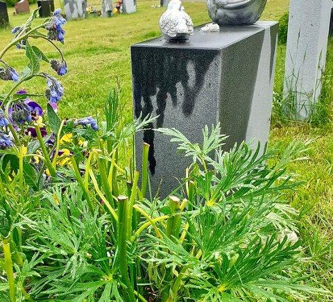 BARNDOMSHJEM: Plantene var hentet fra barndomshjemmet til Wenches far.