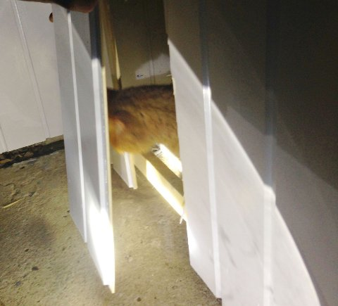 ENDELIG: Her stikker katten hodet ut i friluft etter å ha sittet stengt bak panelet.