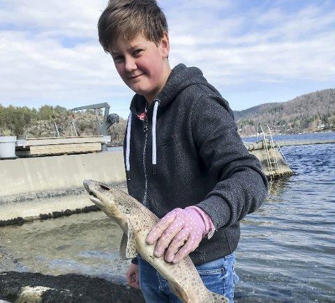 OVERRASKET: Simen Høyvarde Dahl (13) hadde nok ikke forventet å se en småflekket rødhai da han gikk ned til vannkanten ved Eidangerfjorden i helga.