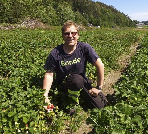 I jordbæråkeren: Leder i Vestfold Bondelag, Thorleif Müller, vurderer jordbruksavtalen med staten. Foto: Privat