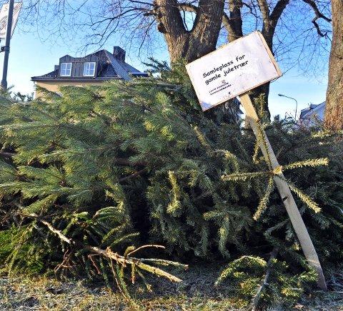 Samleplass: Én av ikke mindre enn 27 samleplasser for kasserte juletrær i Larvik kommune. Foto: Østlands-Posten