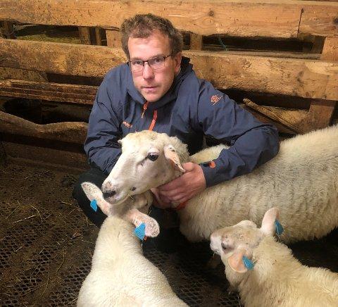 TRYGGE: Søya og dei to lamma er vel heime i fjøset, og trygge hjå matfar Knut Hauge.