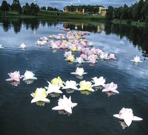 LOTUSBLOMSTER: Aldri er Doktortjønna vakrere. Blomstene lyser opp de siste nattetimene den 6. august.