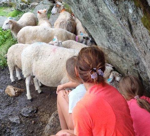 SØKTE LY: Då torebya kom for fullt, kunne ikkje familien gjera anna enn å søka ly. Heldigvis fann dei ein stor stein dei kunne gøyma seg under. Her hukar Anita Ugulen og døtrene Leah (9) og Lilja (11) seg saman med sauene.