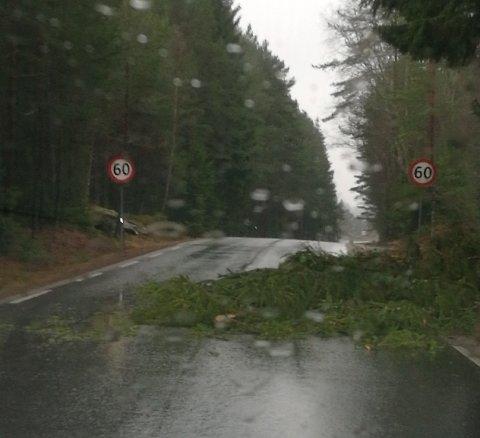 VINDKAST MED KRAFT I: Vinden har blåst et tre over Kurfjordveien mot Møvik.