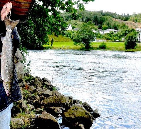 LAKSEELV: Kvinaelva er bra for laksefiske.