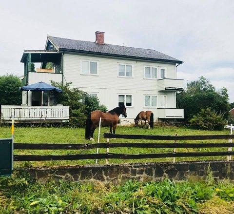 KOSTE SEG: Her er Klossen og Coolio på ferieopphold i hagen på Tongjordet.