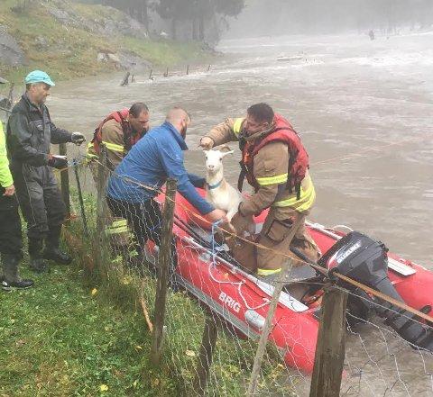 REDNING: Tre mann frå brannvesenet i Sogndal køyrde tre geiter i slengen med gummibåt, og redda alle 13.