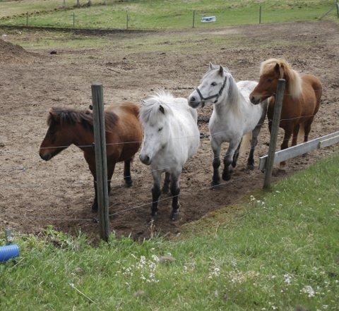 Flere hesten i Norrbotten har blitt mishandlet. Bildet har ingenting med saken å gjøre.