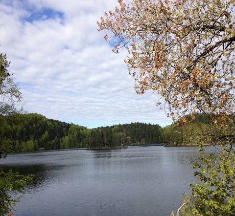 IDYLLISK: Torsdag og fredag er det i området rundt Ulfsbakk o-løperne skal forsøke å finne frem.