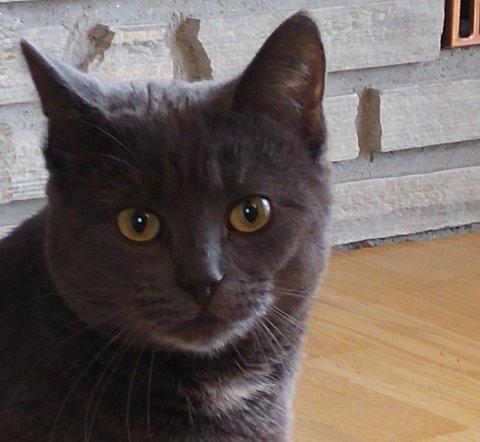 Katten Tassi (1,5) har vært savnet siden 28. januar.