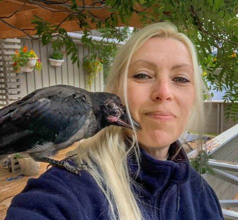 SAVNET: Det er nærmere to måneder siden Buddy kom flaksende ned fra tretoppen. Nå er den vesle kråka savnet av matmor Cecilie Utheim.