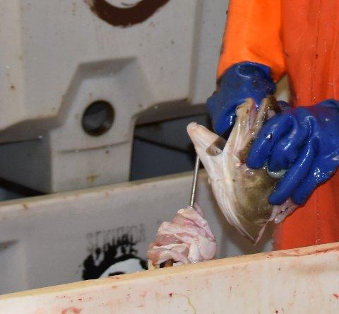 KORONASTOPP: Flere fiskebruk stopper tungeskjæringen.