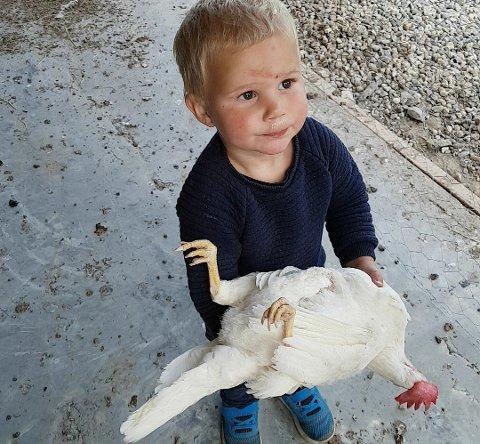 Anders Hartvig Strande var tre år da bildet ble tatt. Han er odelsgutt, og pappa Tore håper utbruddet av fugleinfluensa ikke går deres gård.