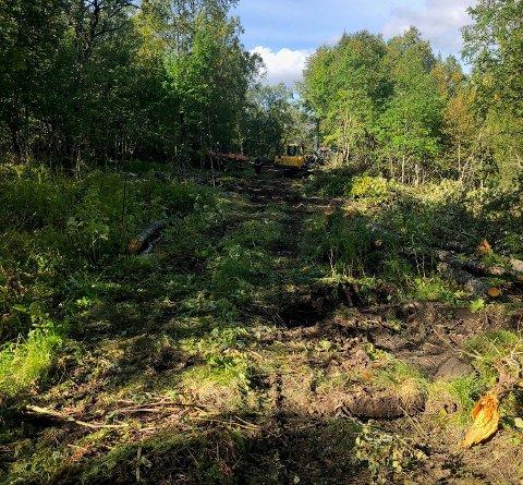 Lite fornøyd: Torbjørn Håke Johansen og moren er kritisk til måten graving og felling av trær har pågått i en ukes tid. Det har skjedd på og rundt deres eiendom uten at de er varslet om arbeidet.