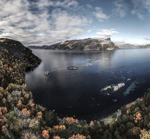 TO TIMAR: K Strømmen sin lokalitet Løypingsneset litt to timar unna med straumen i sjøen. Arkiv