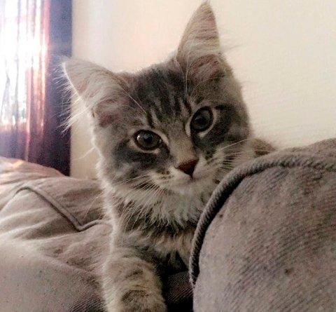 ENDTE I TINGRETTEN: Misty ble gjenstand for et durabelig katteslagsmål mellom en kvinne fra Nedre Eiker og Vestfold.